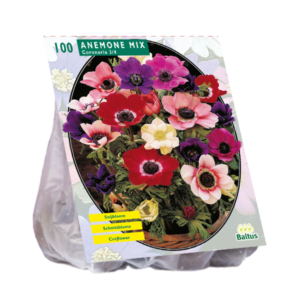 Anemone The Caen Mix per 100