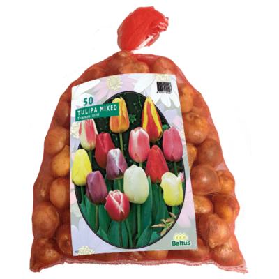 Tulipa Darwin Mix in gaasbaal per 50