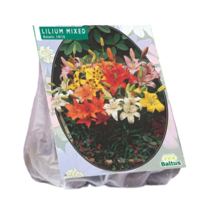 Lilium Asiatic Mix per 10