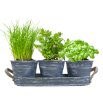 Herb festival per 3 Jeans 2 lowres