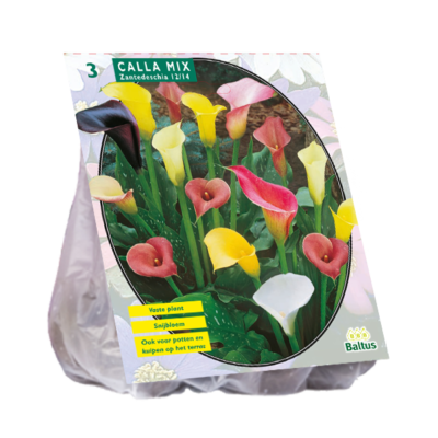 Calla Zantedeschia mix
