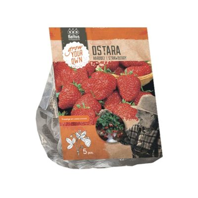 Aardbei | Strawberry Ostara