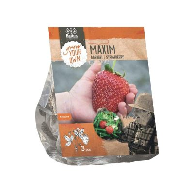 Aardbei | Strawberry Maxim (SUPER)