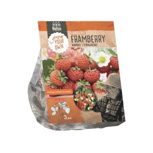 Aardbei | Strawberry Framberry