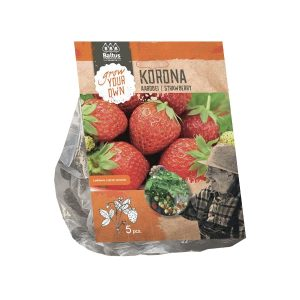 Aardbei | Strawberry Korona
