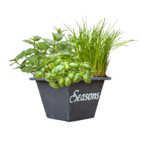 herbs seasons in crate bloeiend lowres