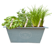 urban growkit herbs blue bloeiend_STOKJE_low-res