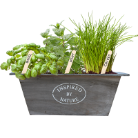 urban growkit herbs grey bloeiend_STOKJE_low-res