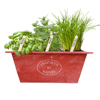 urban growkit herbs red bloeiend_STOKJE_low-res 2