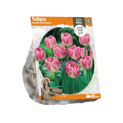 Tulipa Double Late Upstar (Sp) per 10