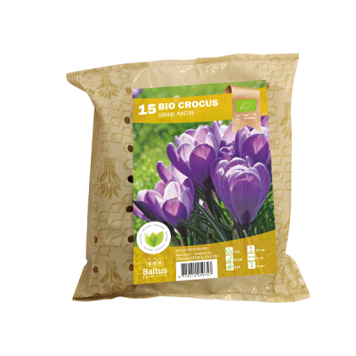 Crocus Grootbloemig Grand Maitre - Bio Packs - Baltus